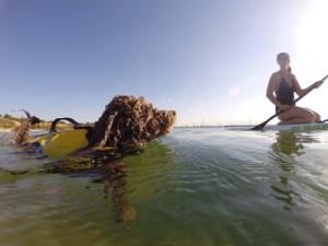Auch beim SUP: unbedingt eine Schwimmweste für Ihren Hund!