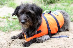 Besorgen Sie eine Schwimmweste für Ihren Hund!
